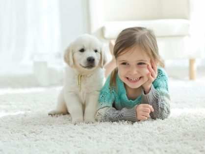 Effective Shag Carpet Cleaning